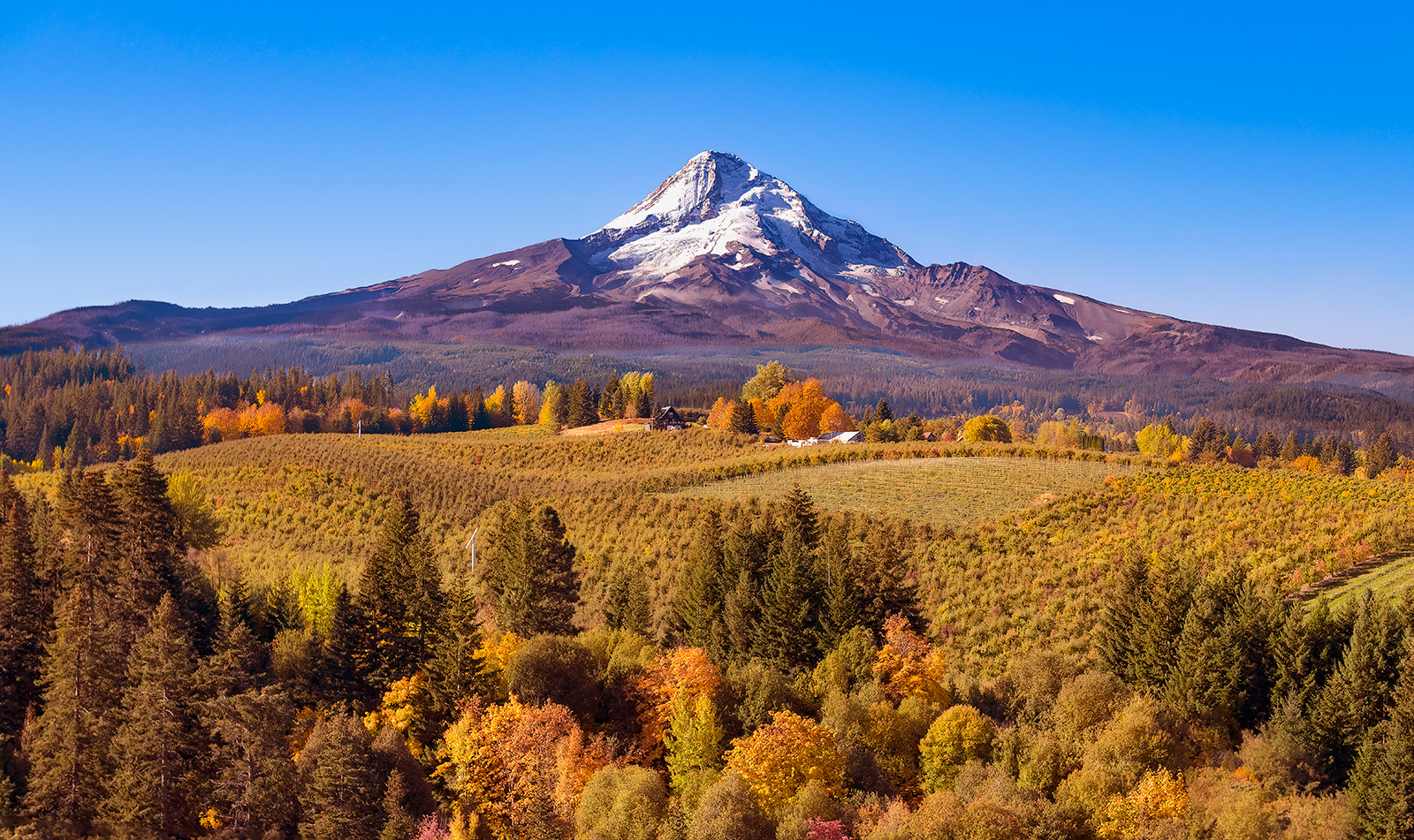 Aerial view of Mt Hood with a fruit orchard in the foreground on an autumn day just after sunrise DJI_141-138-1-V3-Lumist2 -NoAIClear-NoClarity-1-giga-1